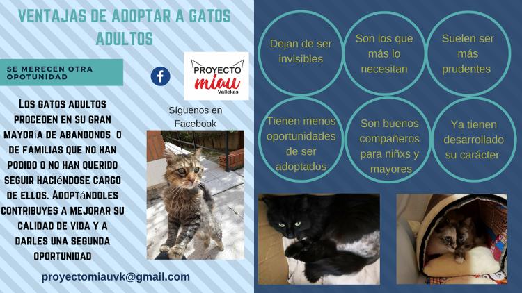 Proyecto Miau Vallecas